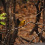 Lake Malawi: bird