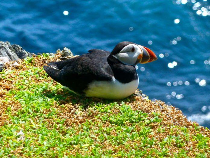 RSPB Troup Head nature reserve