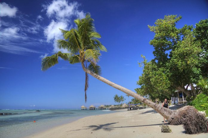 beach and palm tree in Samoa