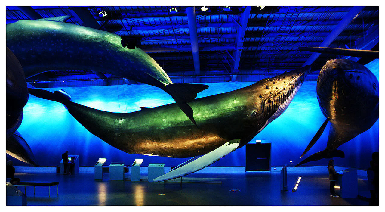 Whales of Iceland Museum, Reykjavik