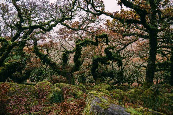 Wistman's Woods in Devon